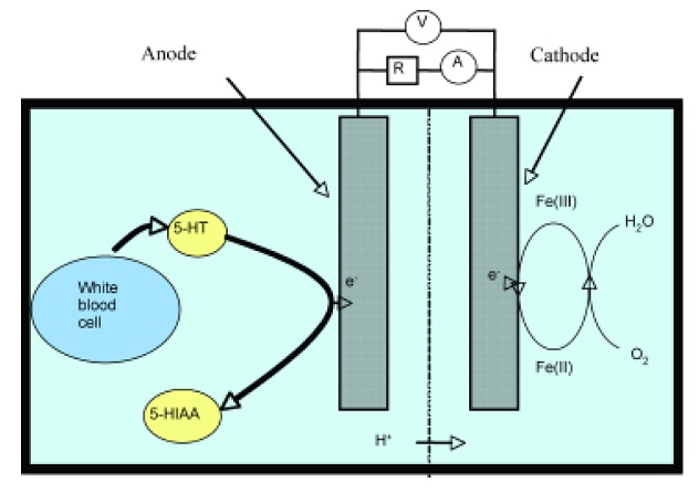 Photooxidation of Tris in a Photoelectrochemical Biofuel Cell JFC CZ as